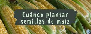 cuando-plantar-semillas-maiz