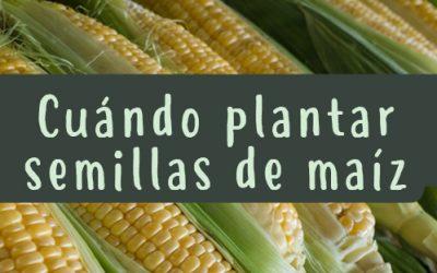 Cuándo plantar semillas de maíz