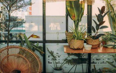Cuidado de plantas en vacaciones
