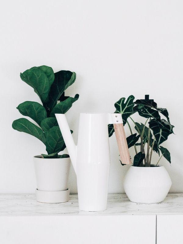 regar-plantas