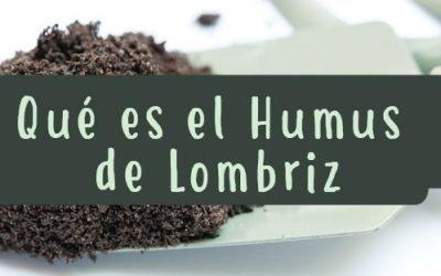Qué es el humus de lombriz