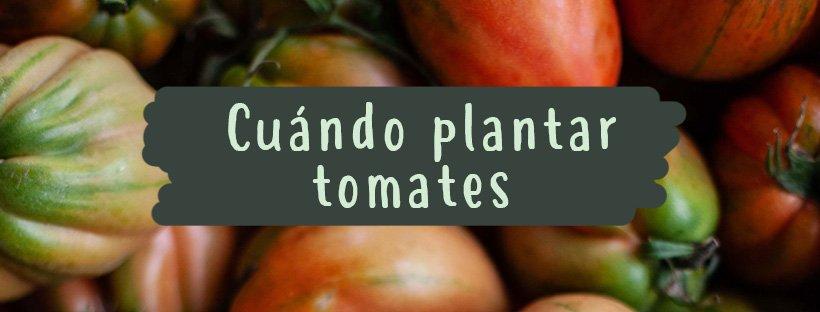 cuando-plantar-tomates