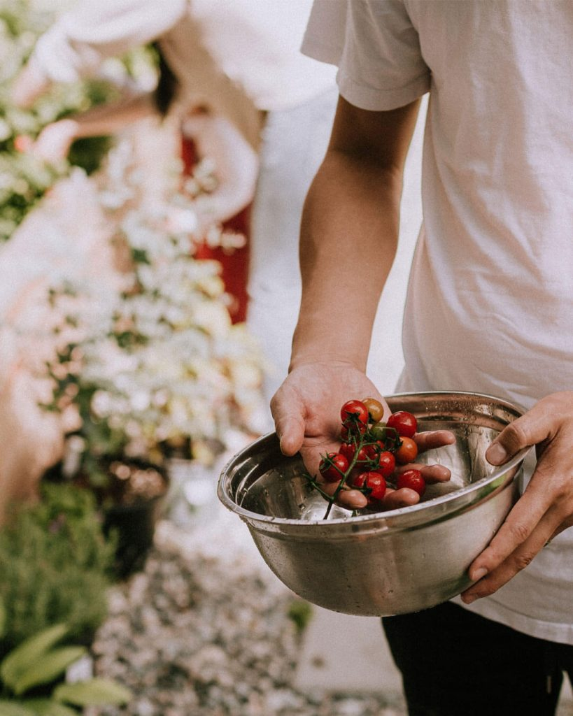 cosechar tomates en casa