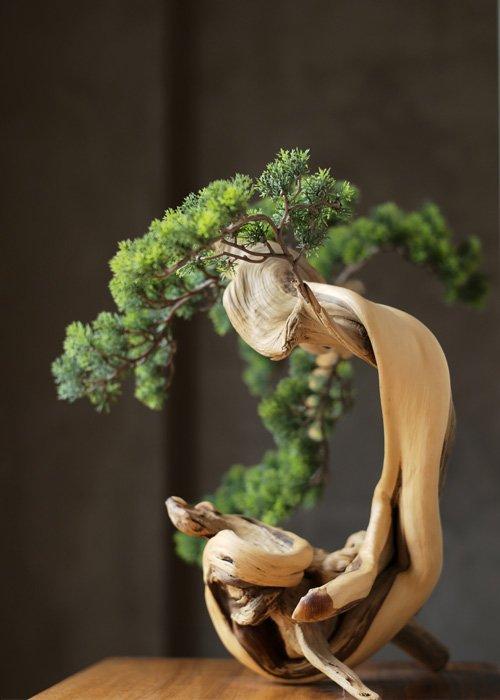 abono organico casero bonsai
