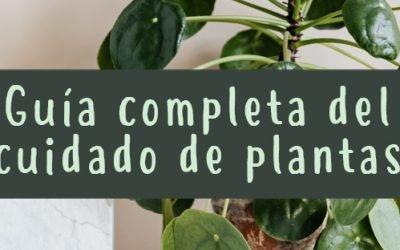 Guía para el cuidado de plantas 4 (3)