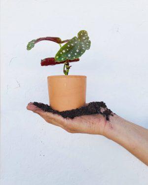 mini-maceta-planta