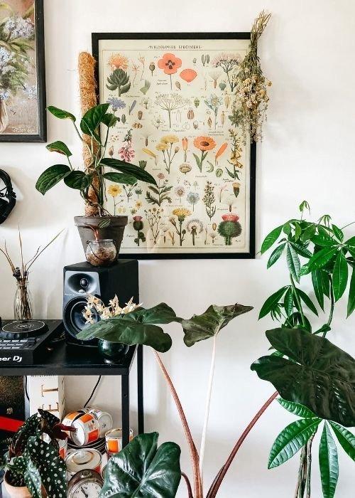 plantas botanicas interior