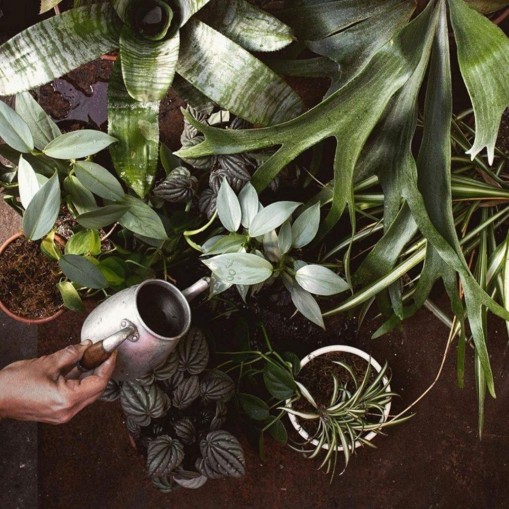 regar plantas de casa