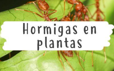 Hormigas en plantas