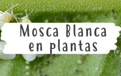 Mosca Blanca en plantas