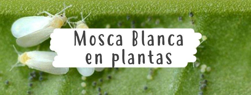 mosca-blanca-plantas