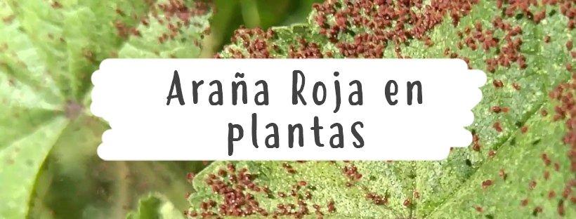 plaga plantas
