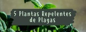 plantas-plagas