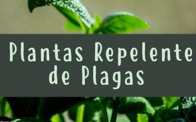 5 plantas repelentes de plagas 5 (8)