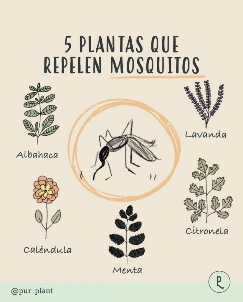 plantas-repelen-mosquitos