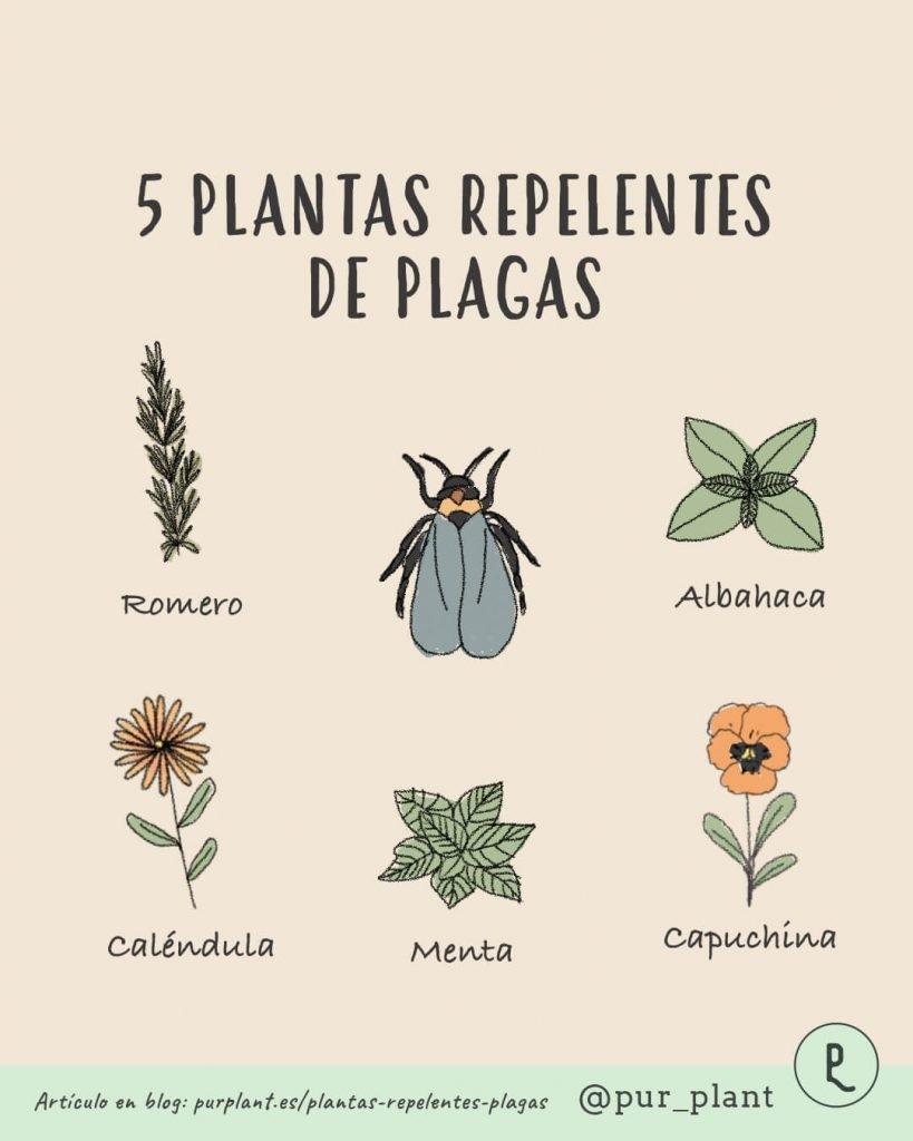 plantas-repelentes-plagas