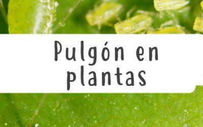 Pulgones en plantas