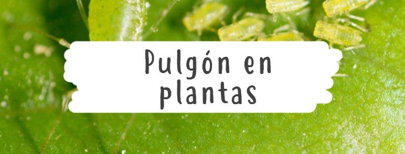 pulgon-plantas