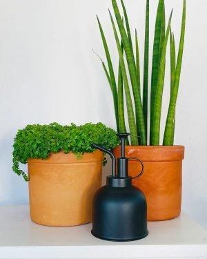 pulverizador-planta-negro-agua