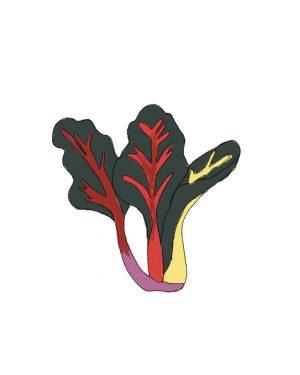 semillas-acelga-multicolor