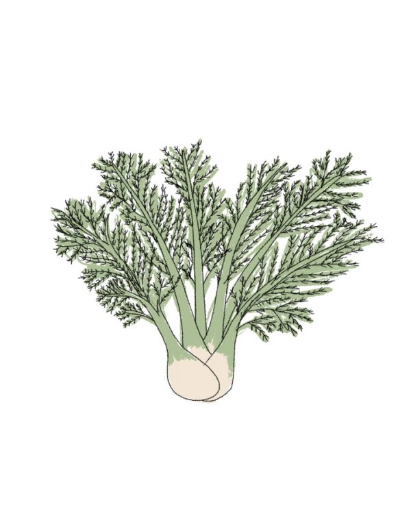 semillas-ecologicas-hinojo