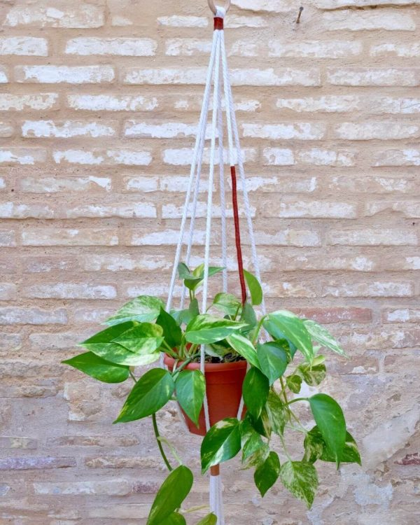 colgador-macrame-plantas-teja