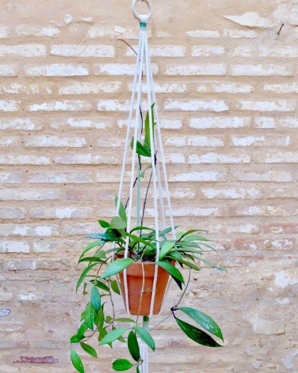 colgador-macrame-plantas-verde