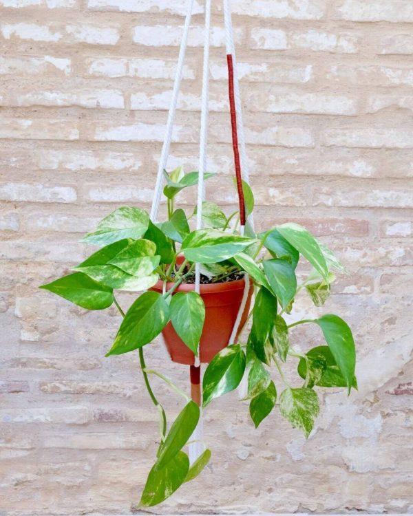 colgante-macrame-plantas-teja