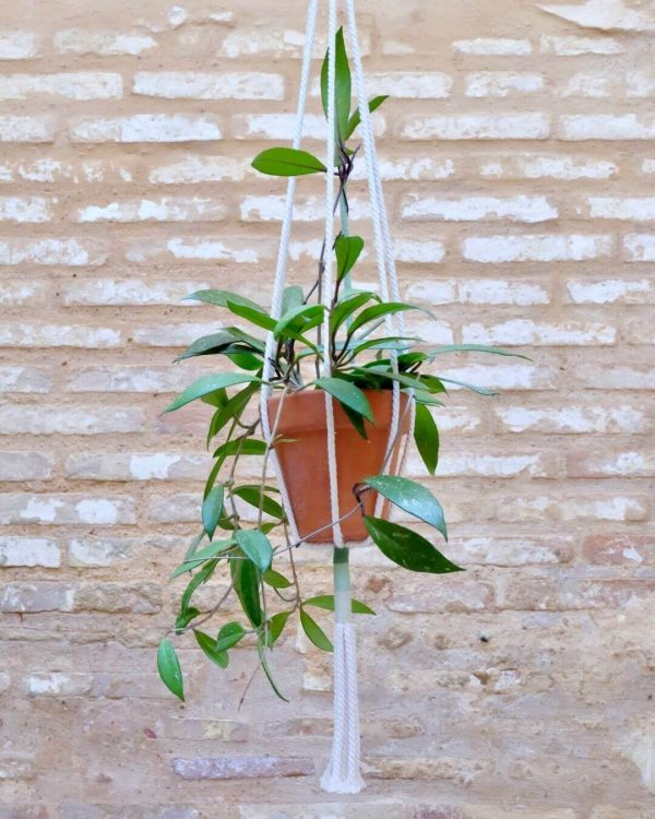 colgante-macrame-plantas-verde