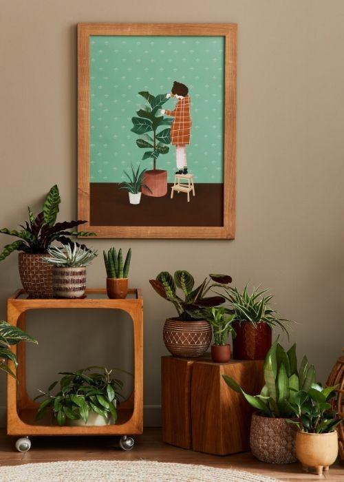 cuidar plantas interior