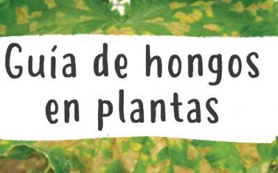 Hongos en las plantas 4 (4)