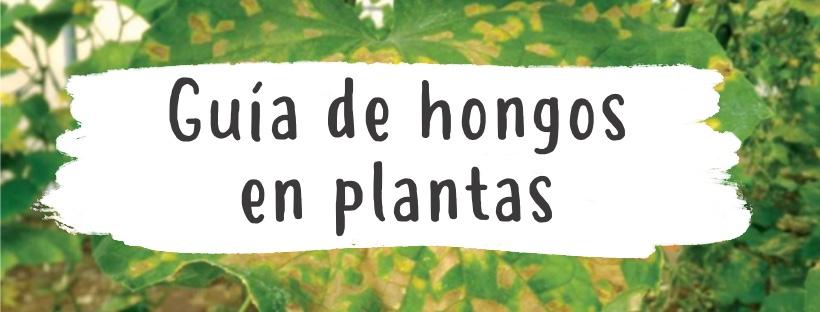 hongos-en-plantas