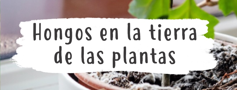 Cómo eliminar hongos en la tierra de las plantas 4 (3)