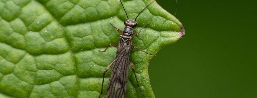 insecticida para trips