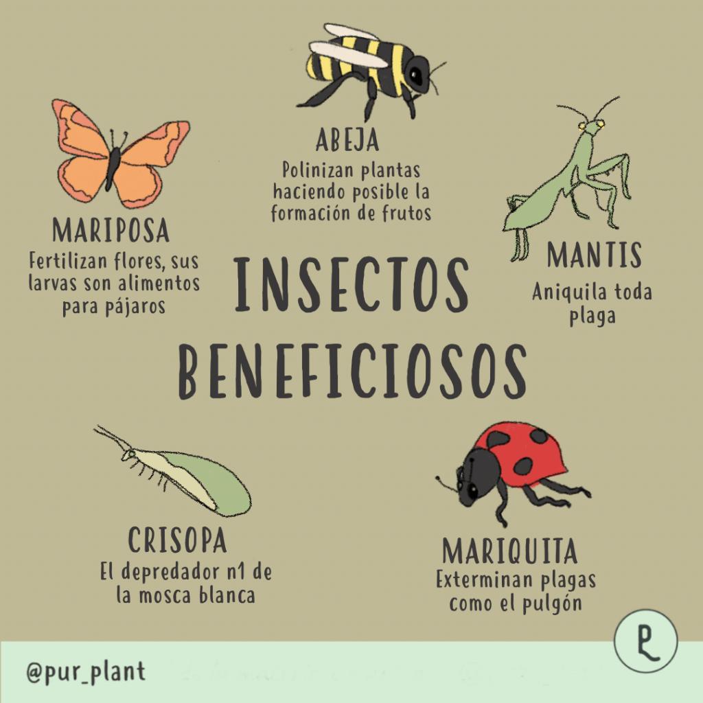 insectos-beneficiosos