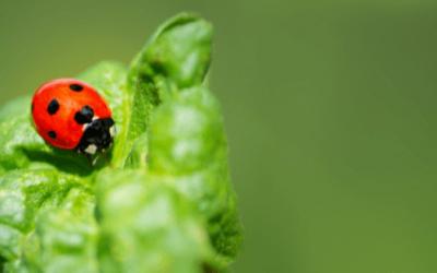 Insectos beneficiosos para plantas 0 (0)