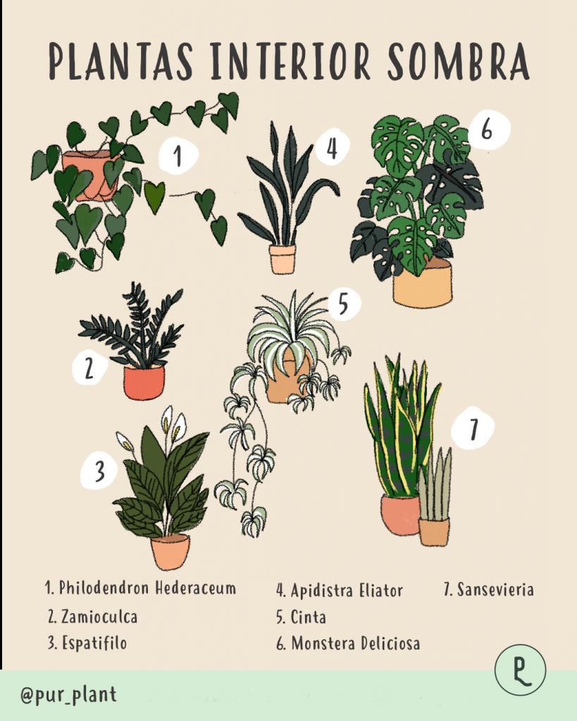 plantas-interior-sombra