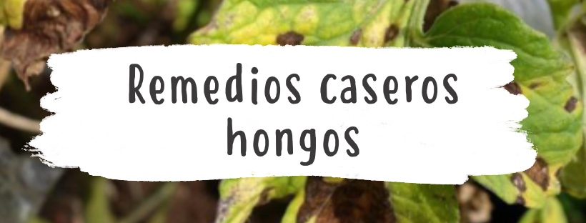 Remedios caseros para las plantas con hongos 0 (0)
