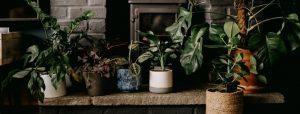 decoracion-de-casa-con-plantas