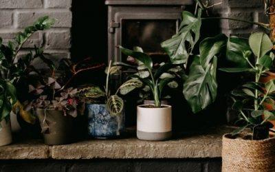 Decoración de casa con plantas: el nuevo hobby 5 (2)